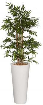 Bambou Décoratif 200